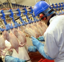 Man working in a chicken processing factory